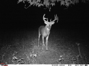Love this buck, saw him many times last fall, can't wait to see him this year.
