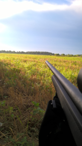 PNGyote hunt